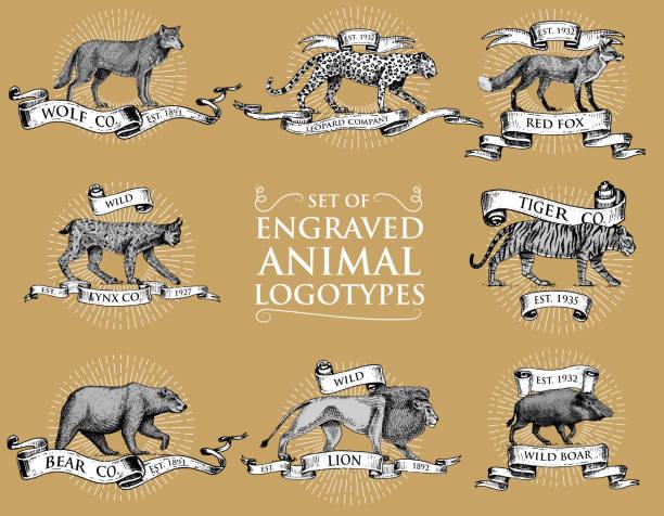 Wildschwein Mann Cartoon Maskottchen Stock Vektor Art und mehr Bilder von  Braun - iStock