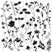 Big set silhouettes botanic blossom floral elements. Branches, leaves, herbs, wild plants, flowers. Garden, meadow, feild collection leaf, foliage. Vector illustration isolated on white background