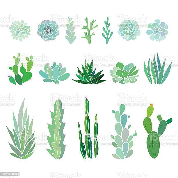 Big set with cactuses and succulents vector id532334300?b=1&k=6&m=532334300&s=612x612&h=lx98hy902xqrv4zqhphi8sjapdze8q4pbjclrvriius=