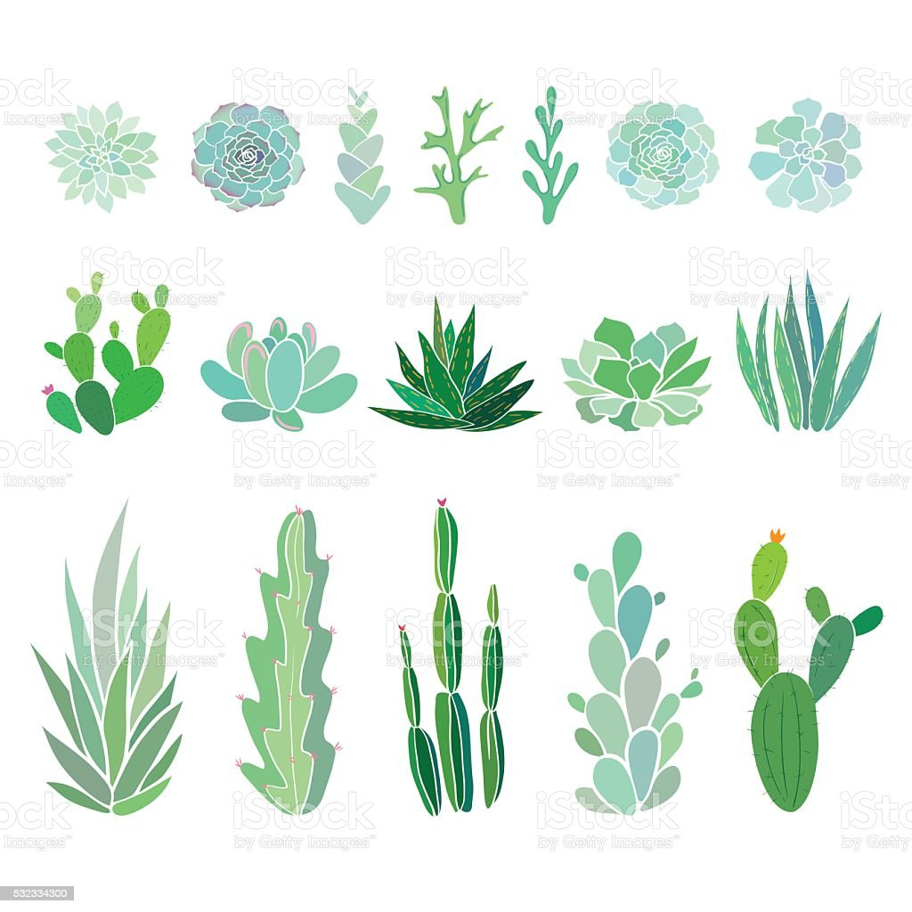 big set with cactuses and succulents vector art illustration