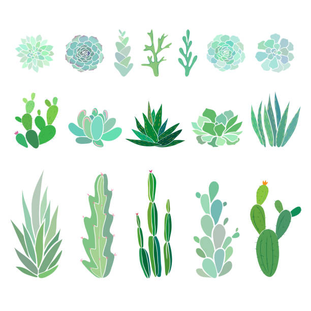 big set with cactuses and succulents succulents and cactuses isolated on white, vector floral illustration moss stock illustrations