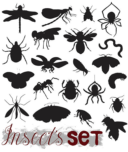 stockillustraties, clipart, cartoons en iconen met big set with sihouettes of various insects - zijdeworm