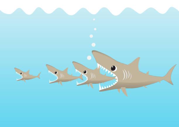 große haifische essen kleinen hai, große fische frisst kleine fische business konzept vektor-illustration - haifischköder stock-grafiken, -clipart, -cartoons und -symbole