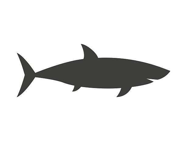 Big Shark Outline Icon Big shark silhouette vector illustration. Marine predator outline icon isolated on white background. Sea monster fish. great white shark stock illustrations