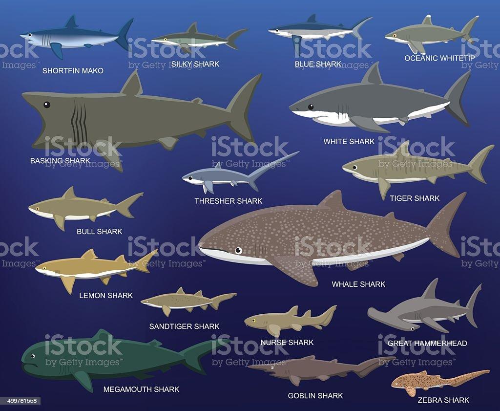 Big Shark Size Comparison Cartoon Vector Illustration vector art illustration