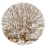 A pen and ink style drawing of a big old oak tree.