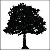 tree silhouette ...