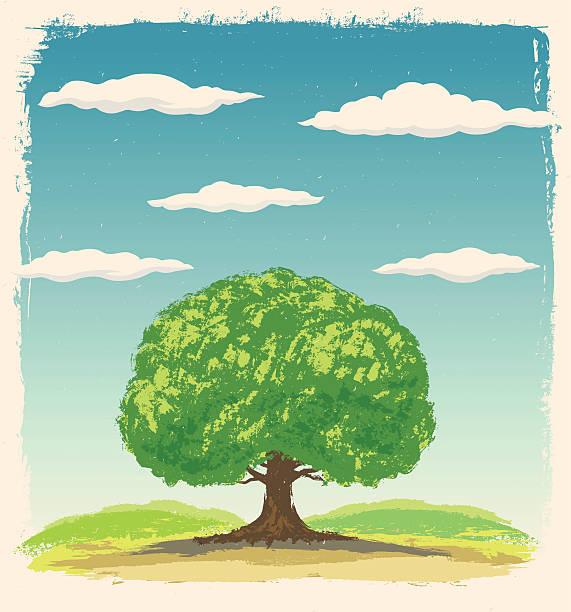 big tree. - buchenholz stock-grafiken, -clipart, -cartoons und -symbole
