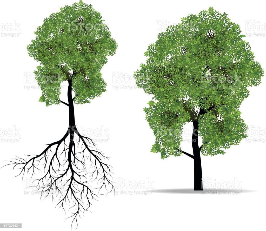 Arbre Avec Racine grand arbre avec racine – cliparts vectoriels et plus d'images de