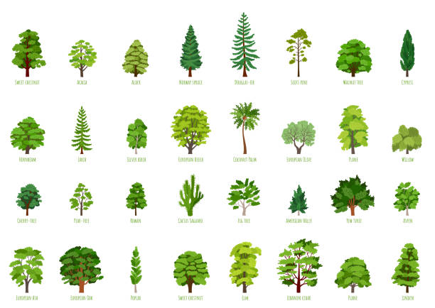 Big Vector cartoon set with trees isolated The collection of trees isolated on white background. Big Vector cartoon set with sapling for forest landscape. Environment elements in flat style living organism stock illustrations