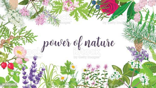 Big vector set of beautiful flowers and plants ornament with text of vector id843833480?b=1&k=6&m=843833480&s=612x612&h=dhroydh dr3hbr9j8dnwj2h0jf30coguueqdanltz0i=