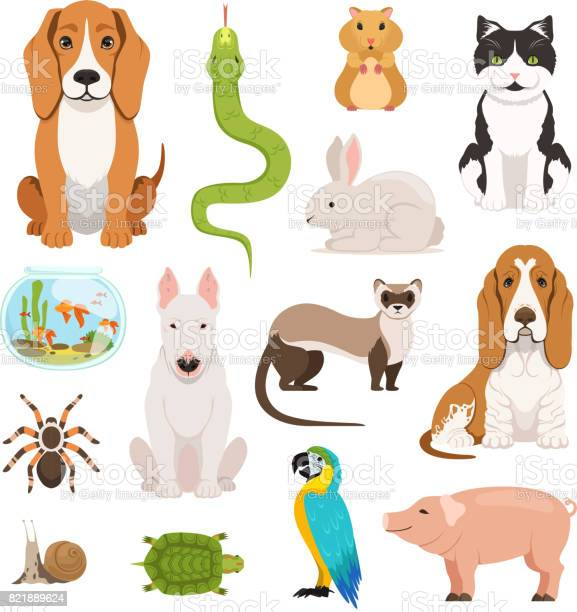 Big vector set of different domestic animals cats dogs hamster and vector id821889624?b=1&k=6&m=821889624&s=612x612&h=fcywrpeskypb1f2mylhft7yp0wgxqi1i5cyqwmzjpnq=