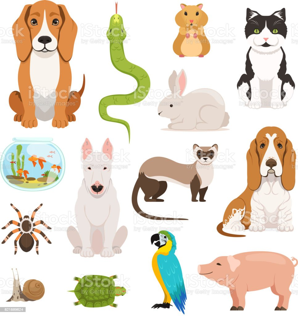 Big vector set of different domestic animals. Cats, dogs, hamster and other pets in cartoon style vector art illustration