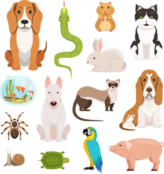 ilustraciones, imágenes clip art, dibujos animados e iconos de stock de conjunto de vector grande de diferentes animales domésticos. gatos, perros, hamster y otros animales en estilo cartoon - animales de granja