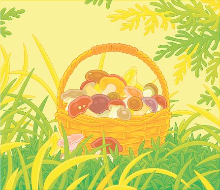 Big wicker basket full of mushrooms