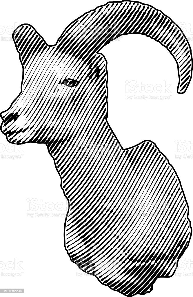 Bighorn Sheep Head vector art illustration