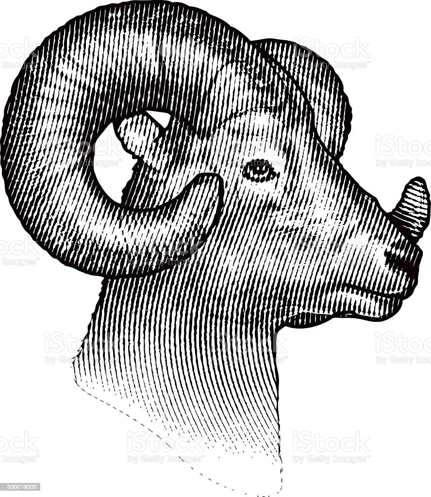 Bighorn Sheep Isolated on White Background vector art illustration