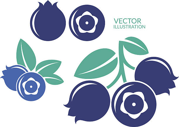 illustrazioni stock, clip art, cartoni animati e icone di tendenza di bilberry - mirtilli