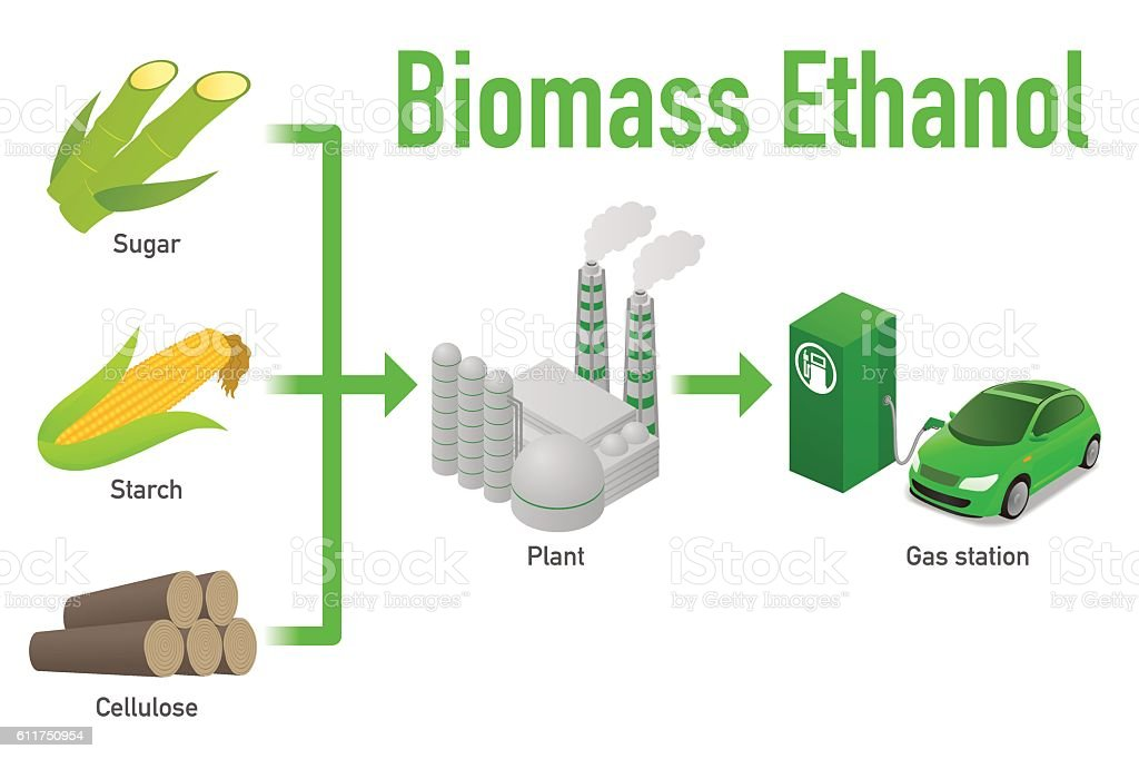 Biofuel Life Cycle Biomass Ethanol Diagram Illustration Stock Vector
