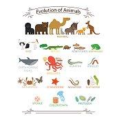 Biological evolution animals