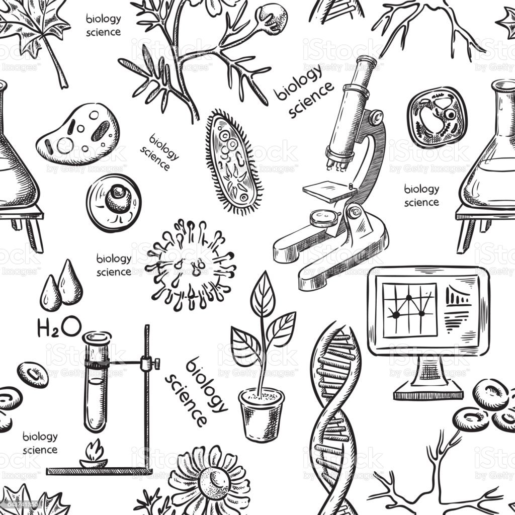 Biological science hand drawing seamless vector art illustration
