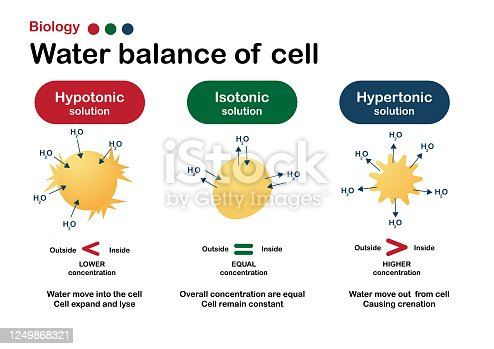 Biology diagram show effect of isotonic, hypertonic and hypotonic solution in water balance of living cell