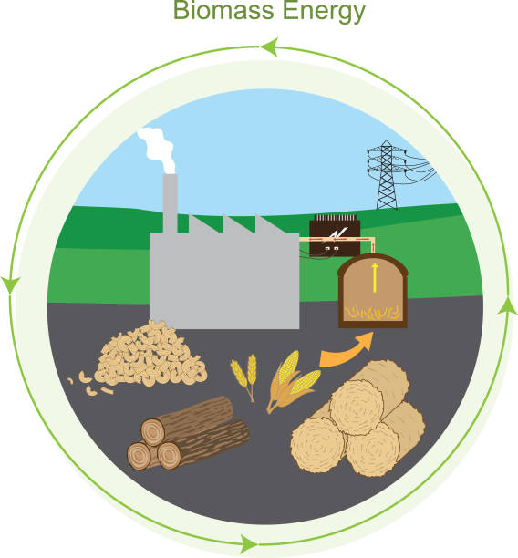 a study on different types of biomass energy that can be converted into liquid biofuels that are bio Biomass (plant material and animal waste) is the oldest source of renewable energy, used since our ancestors learned the secret of fire.