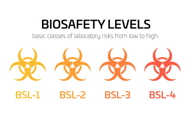 Biosafety level signs from BSL-1 to BSL-4. Simple flat vector biohazard caution signs used in laboratory. Symbol of hazard caused by biological microorganism, virus or toxin Biosafety level signs from BSL-1 to BSL-4. Simple flat vector biohazard caution signs used in laboratory. Symbol of hazard caused by biological microorganism, virus or toxin. infectious disease stock illustrations