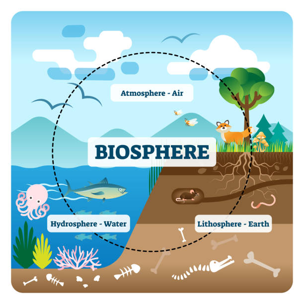 Biosphere vector illustration. Labeled all natural ecosystems with wildlife vector art illustration