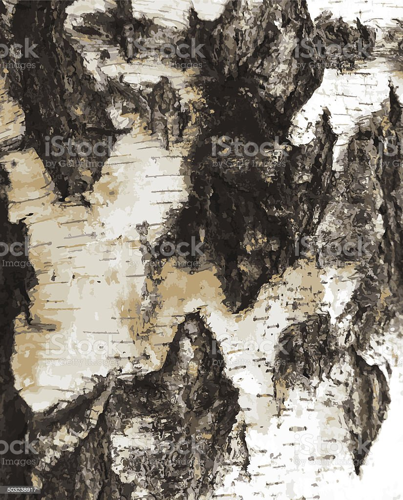 Birch bark texture pattern vector art illustration