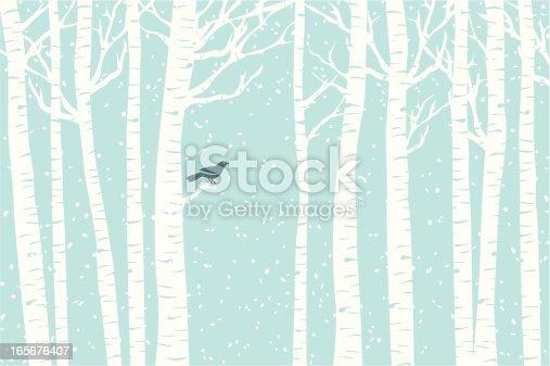 istock Birch Perch 165676407