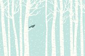 A bird perches among the birch trees while the snow softly falls.