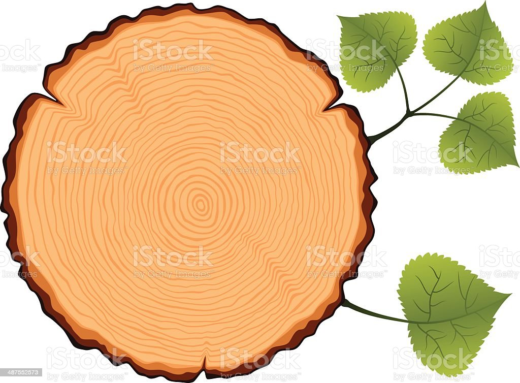birch tree cross section stock vector art more images of aging rh istockphoto com Oak Wood Grain Teak Wood Grain