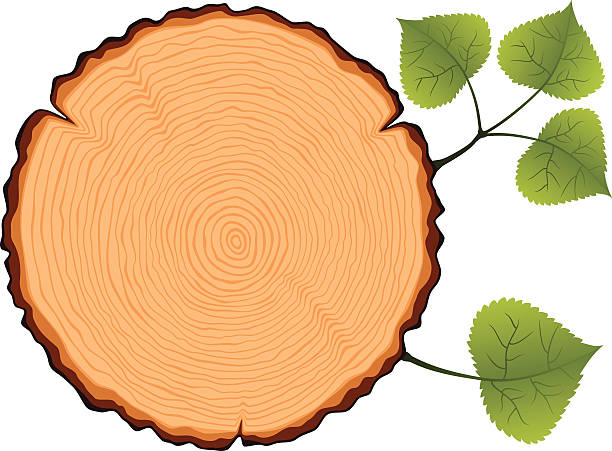 Best Tree Rings Illustrations, Royalty-Free Vector ...