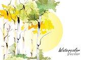 Birch tree ,forest birch trees  vector watercolor brush hand drawn ,vector illustration