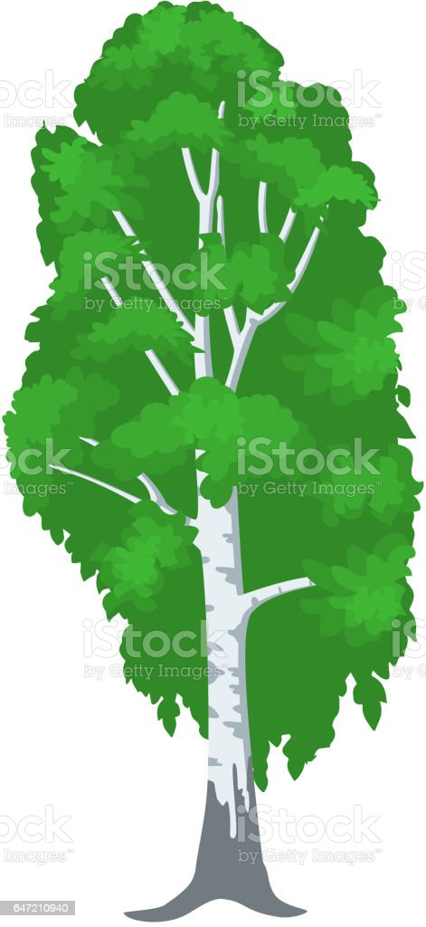 birch tree isolated on white. vector art illustration