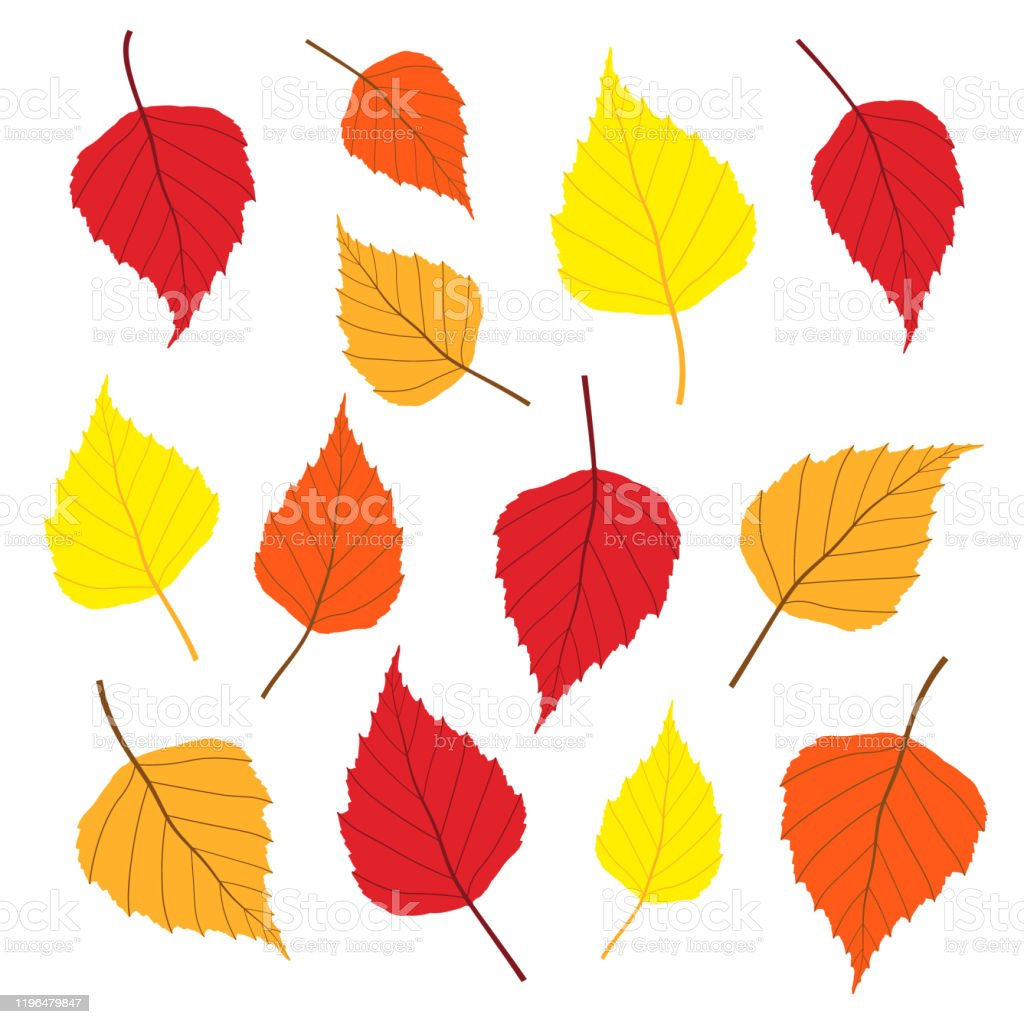 Birch Tree Leaf Icon Shape Set Different Colors Forest Leaves Symbol Sign Pack Vector Illustration Image Autumn Fall And Summer Graphic Color Collection Green Yellow Red Brown Nature Logo Stock Illustration