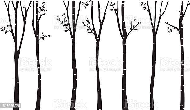 Birch tree silhouette background vector id618225226?b=1&k=6&m=618225226&s=612x612&h=4mtmanj0fofq 8tkn3z7mw ajai3kgk4fosdqyjscs0=