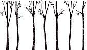 Birch Tree Silhouette Background