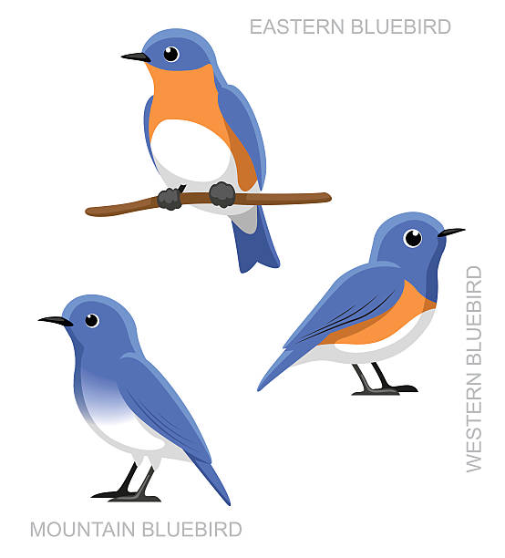 Best Bluebird Illustrations, Royalty-Free Vector Graphics ...