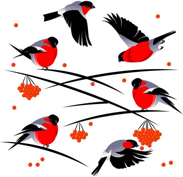 bird dompfaff - dompfaff stock-grafiken, -clipart, -cartoons und -symbole