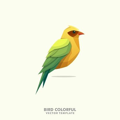 Bird Colorful illustration vector Design template