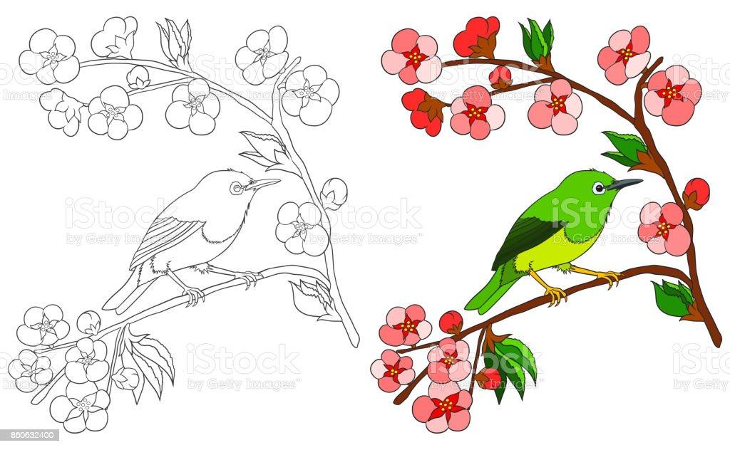 Ilustración De Aves Para Colorear Libro Aislado En Blanco Con Color Ejemplo Ave Japonés Ojo De Blanco Sentada En La Rama De Sakura Con Flores De