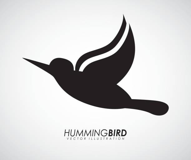 Bird design vector art illustration