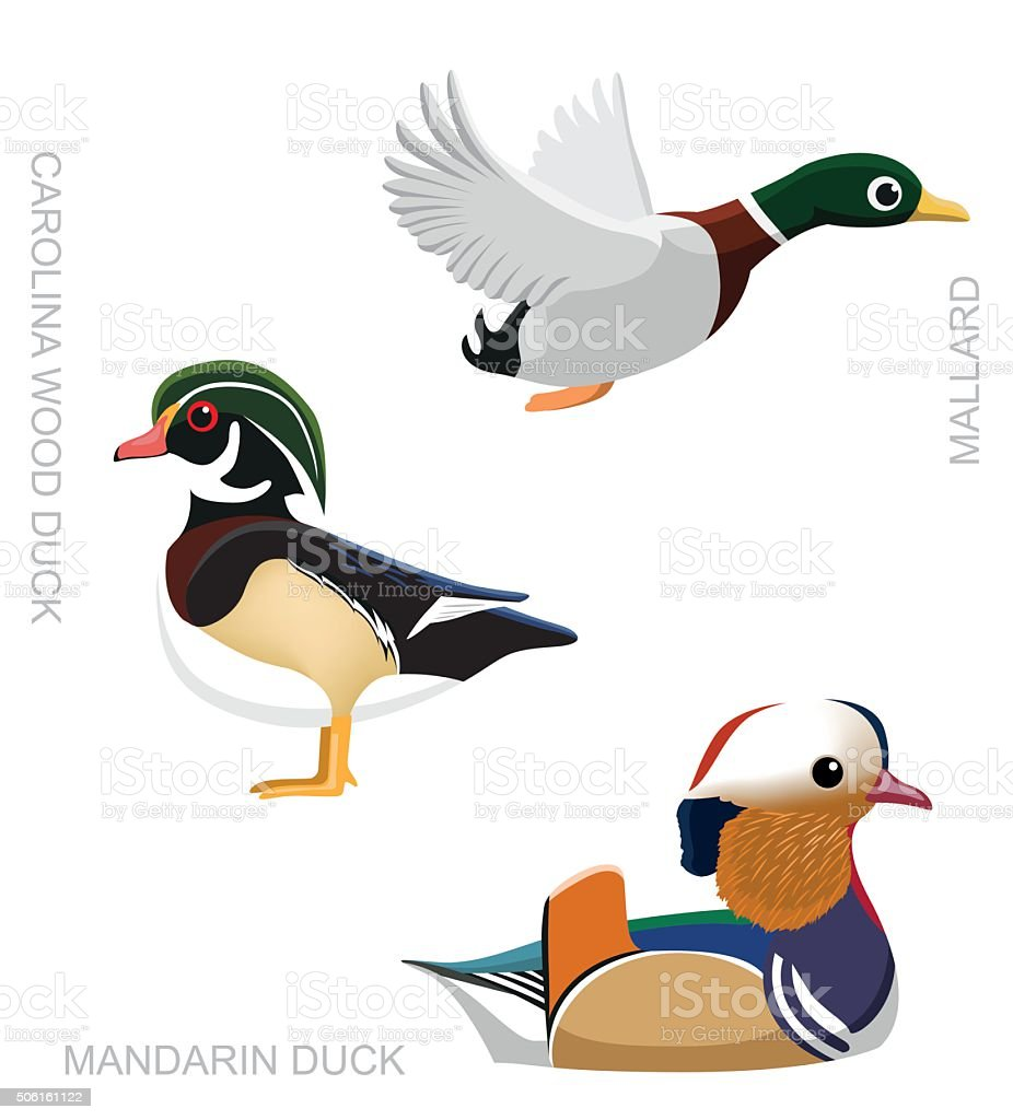 Bird duck set cartoon vector illustration stock vector art - Illustration canard ...