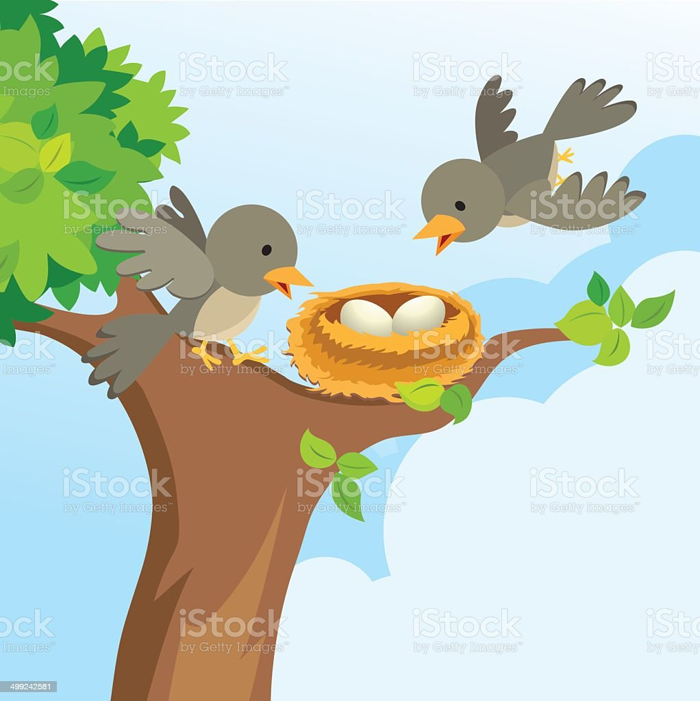 Mother and father bird build a nest. There are beautiful eggs in the...