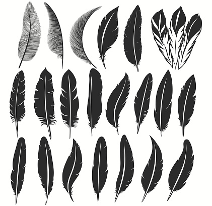 Bird feather icon, writing symbol. Fallen fluffy feathers isolated. vector