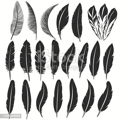 Bird feather icon collection, writing symbol. Fallen fluffy feathers isolated. Exotic soft feather set. Vector illustration