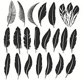istock Bird feather icon, writing symbol. Fallen fluffy feathers isolated. vector 1255045555