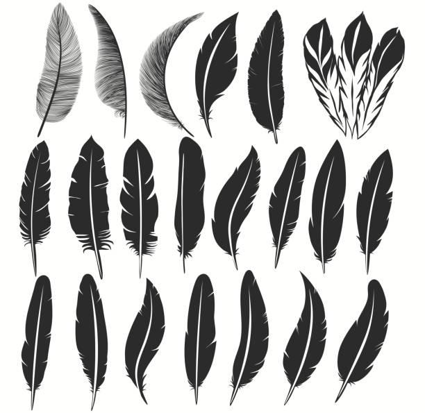 ikona ptasiego pióra, symbol pisania. upadłe puszyste pióra odizolowane. wektor - pióro przyrząd do pisania stock illustrations